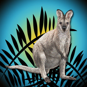 Russell The Wallaby