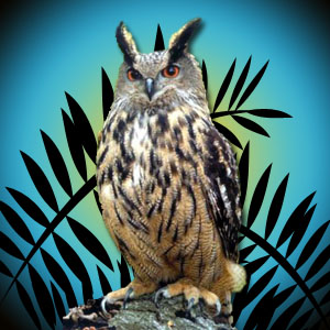 Warlock The Eagle Owl